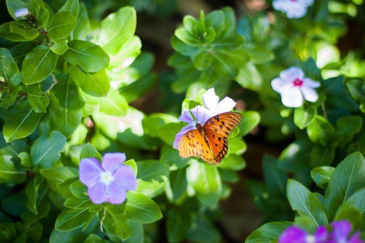 Consejos de primavera para nuestros jardines - AVANT Servicios