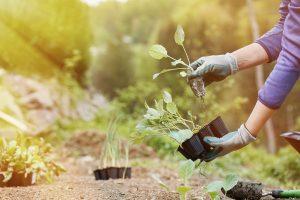 Servicio de Jardinería - AVANT Servicios