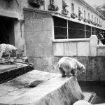 Foso de los osos en la Casa de Fieras, 1958