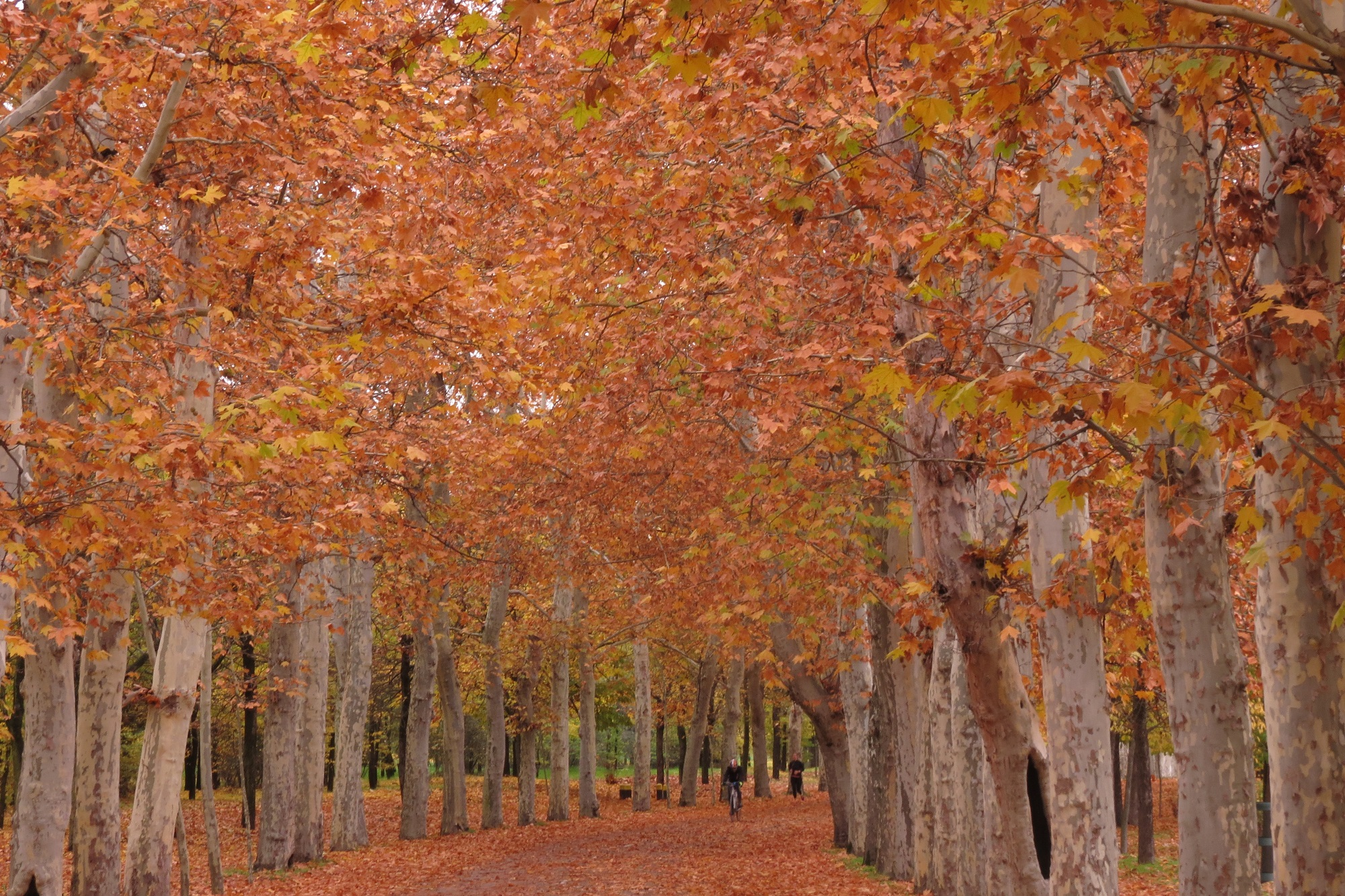 Paseo de otoño por la Casa de Campo