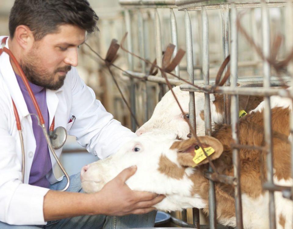 Clínicas veterinarias. Mucho más que cuidar perros y gatos