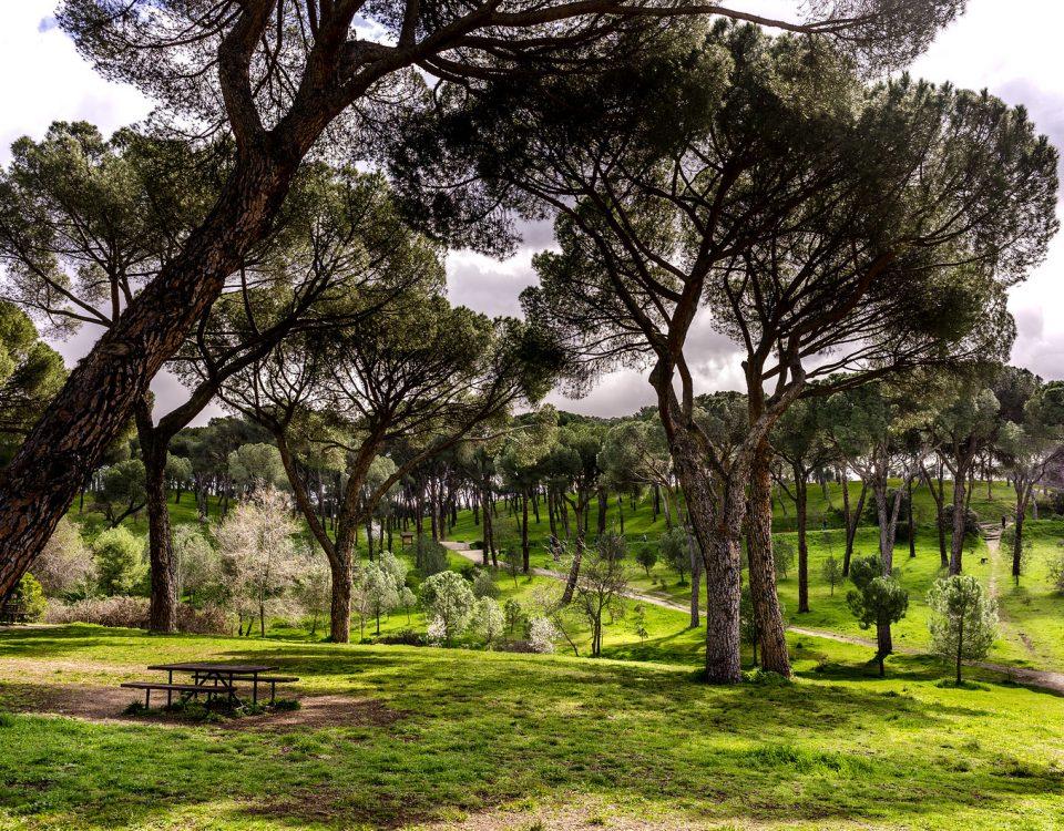 Dehesa de la Villa Madrid Parque