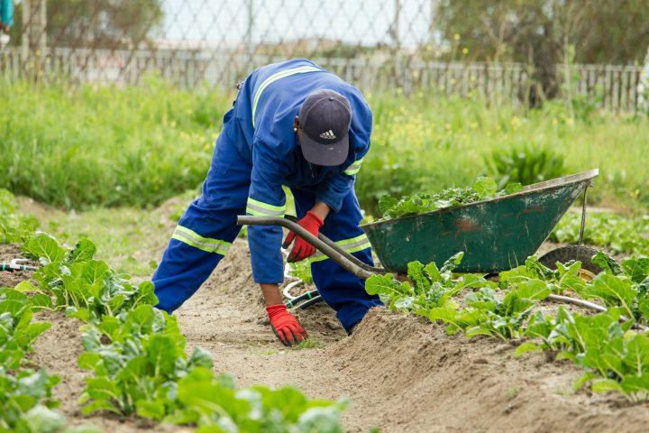 Jardín en otoño. Consejos para preparar y cuidar nuestro jardín