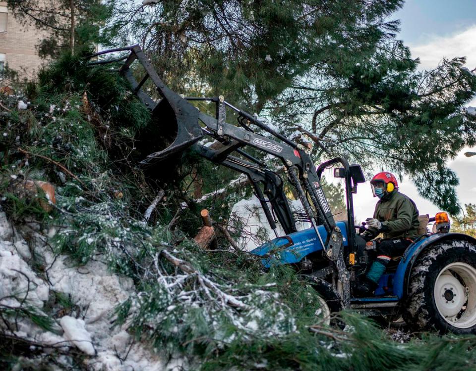 Daños por el temporal. Cómo recuperar parques y jardines tras la nevada