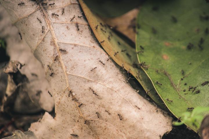 Trucos naturales para ahuyentar a las hormigas de nuestra cocina