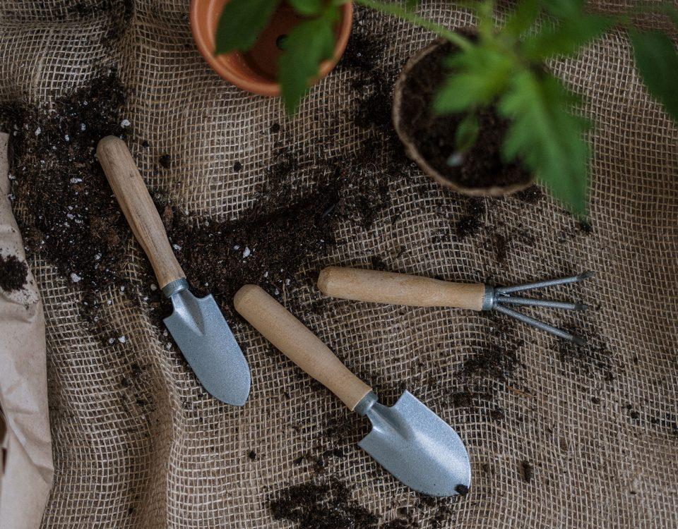 Cómo elegir la tierra o sustrato adecuado para tus plantas
